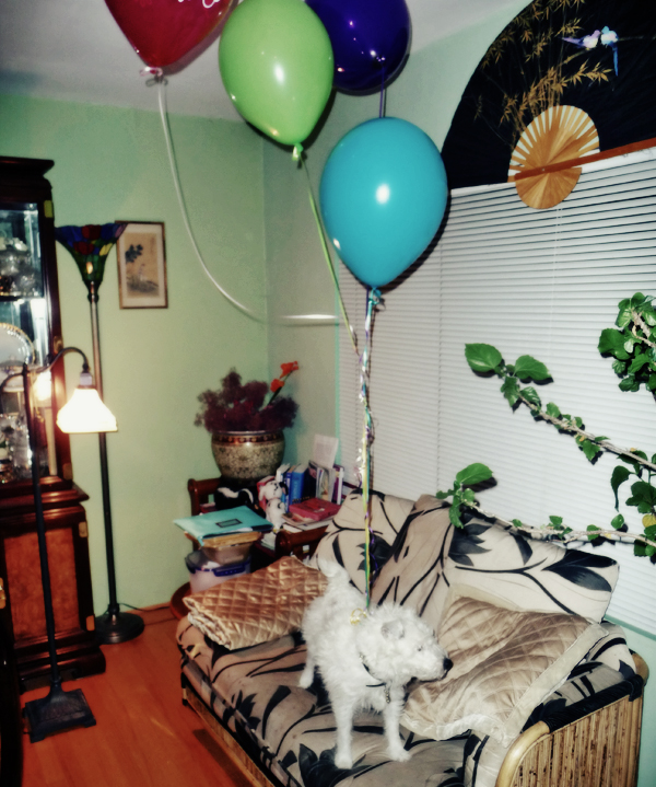 Dog with birthday balloons