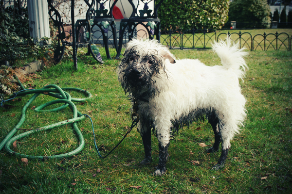 Winkey covered in mud.